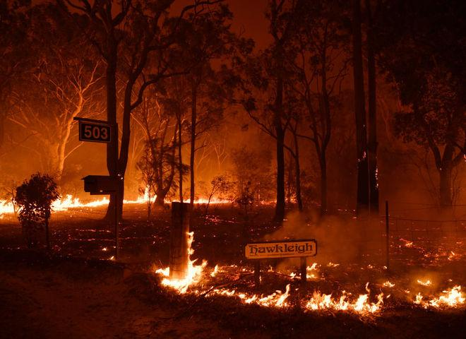 Помогай с удовольствием: как секс-игрушки собирают деньги на восстановление горящих лесов Австралии