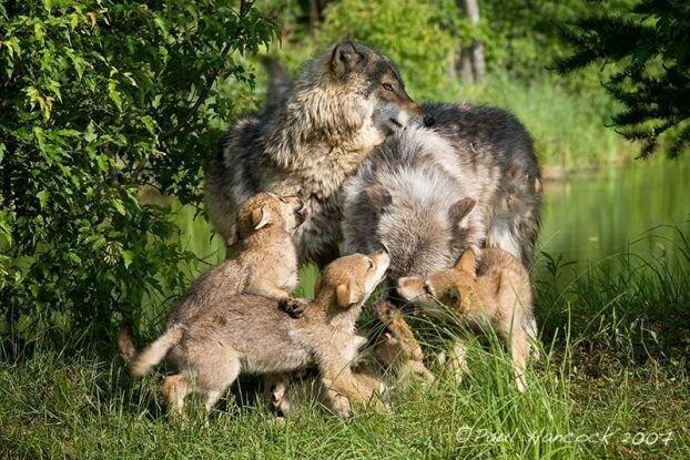 Этим семейным ценностям нужно поучиться у животных