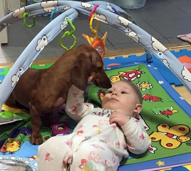 Такса и младенец устроили весёлый выходной для молодого отца