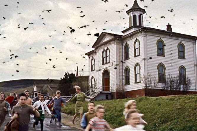 «Кошмар в стиле Хичкока»: житель Уэльса накормил птиц и потерял 300 000