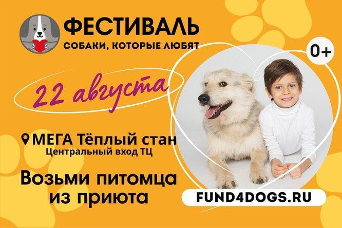 Вы можете взять питомца из приюта на фестиваль «Любимые собаки»