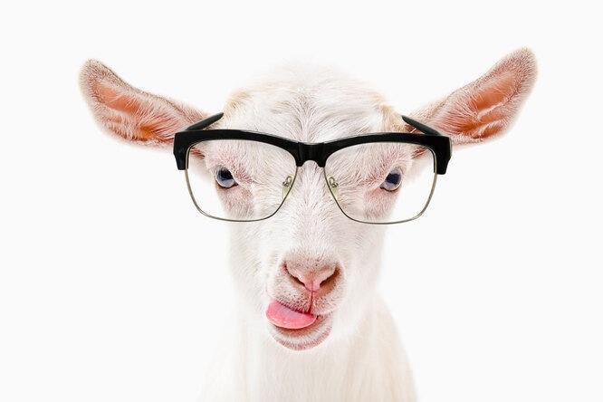 А мы ине знали: 7 самых умных животных наземле