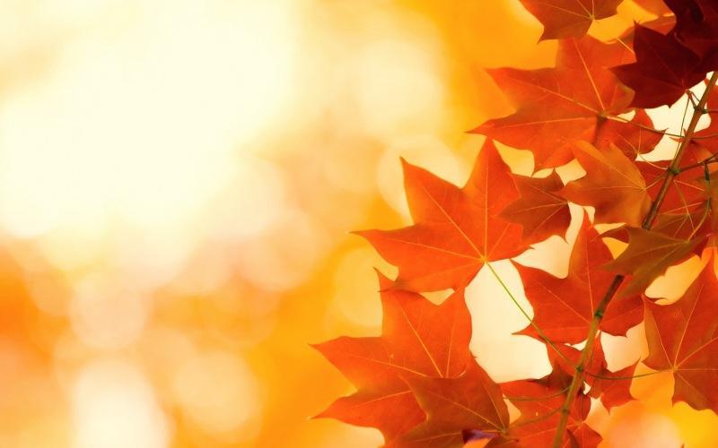 Чего ни в коем случае нельзя делать в день Арины 1 октября 2021 года. Народные приметы и традиции